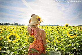 Sommer_vhs_sunflowers-3640935__C__pixabay.com_JillWellington.jpg