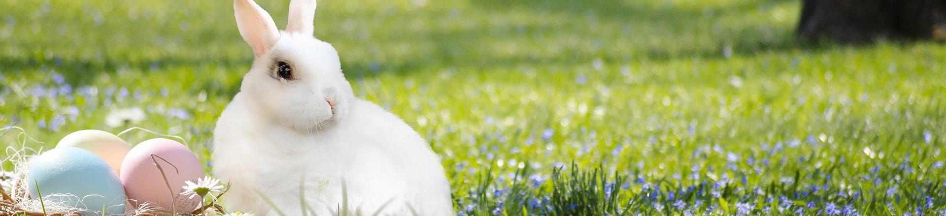 Wir wünschen Ihnen frohe Ostern !